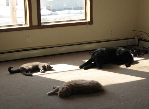 This was truly a Kodak moment. Maya & Mickey love to follow the sun. Riley, not so much.