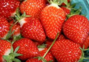 freshstrawberries1