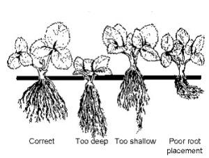 planting-depth